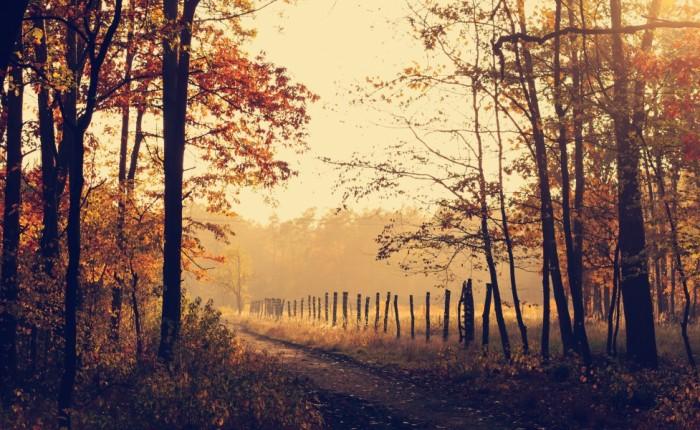 Slowly but Surely – Novel Progress &Introduction